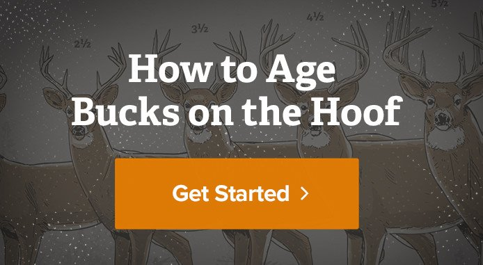 https://www.realtree.com/deer-hunting/how-to-age-bucks