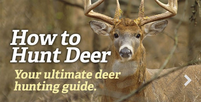 https://www.realtree.com/deer-hunting/how-to-deer-hunt