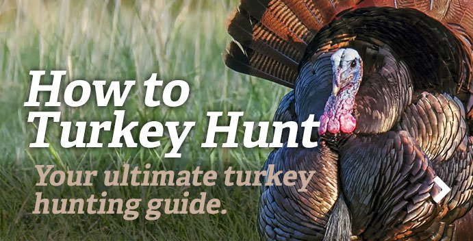 https://www.realtree.com/turkey-hunting/how-to-turkey-hunt