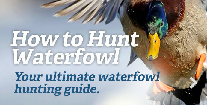 https://www.realtree.com/waterfowl-hunting/how-to-duck-hunt