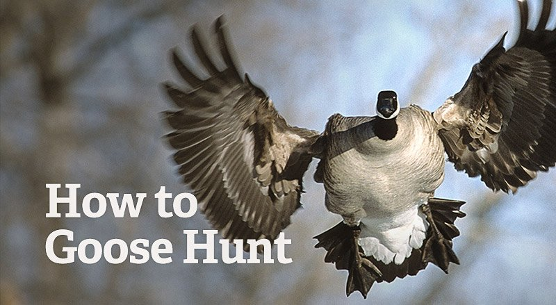 https://www.realtree.com/how-to-goose-hunt