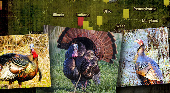 https://www.realtree.com/turkey-hunting/strut-reports