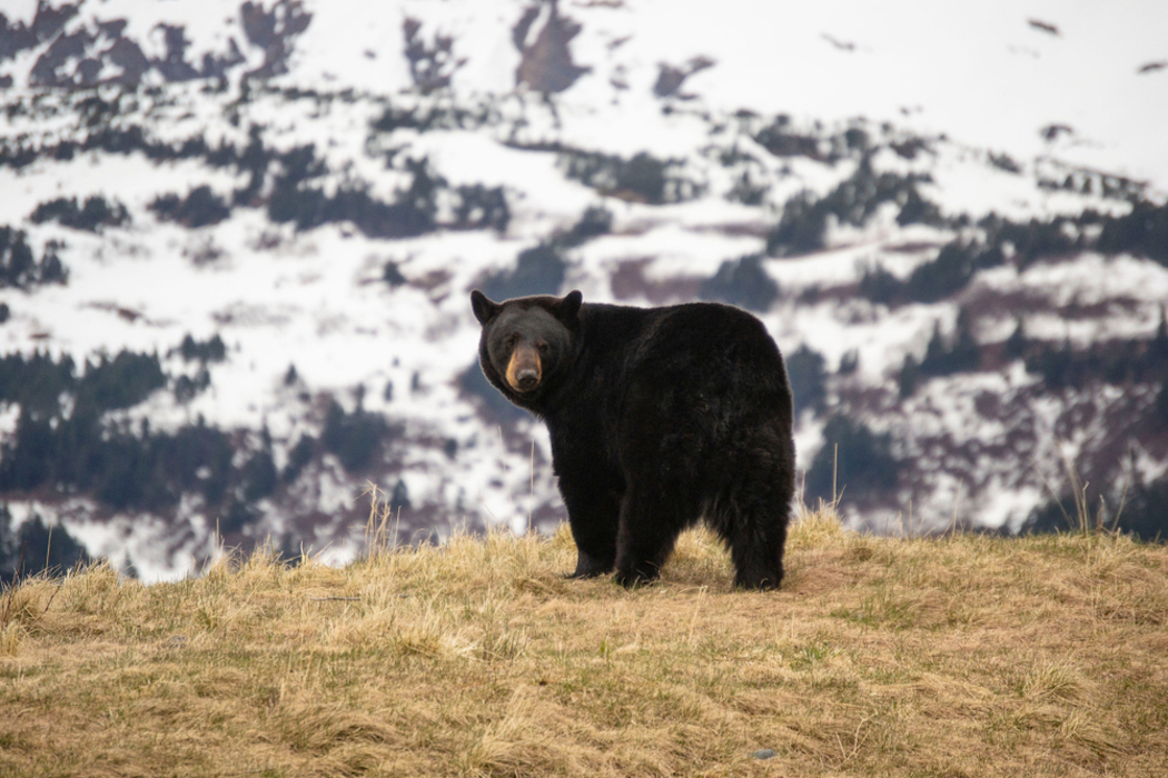 The Best Ammo for Black Bear Hunting | Big Game Hunting