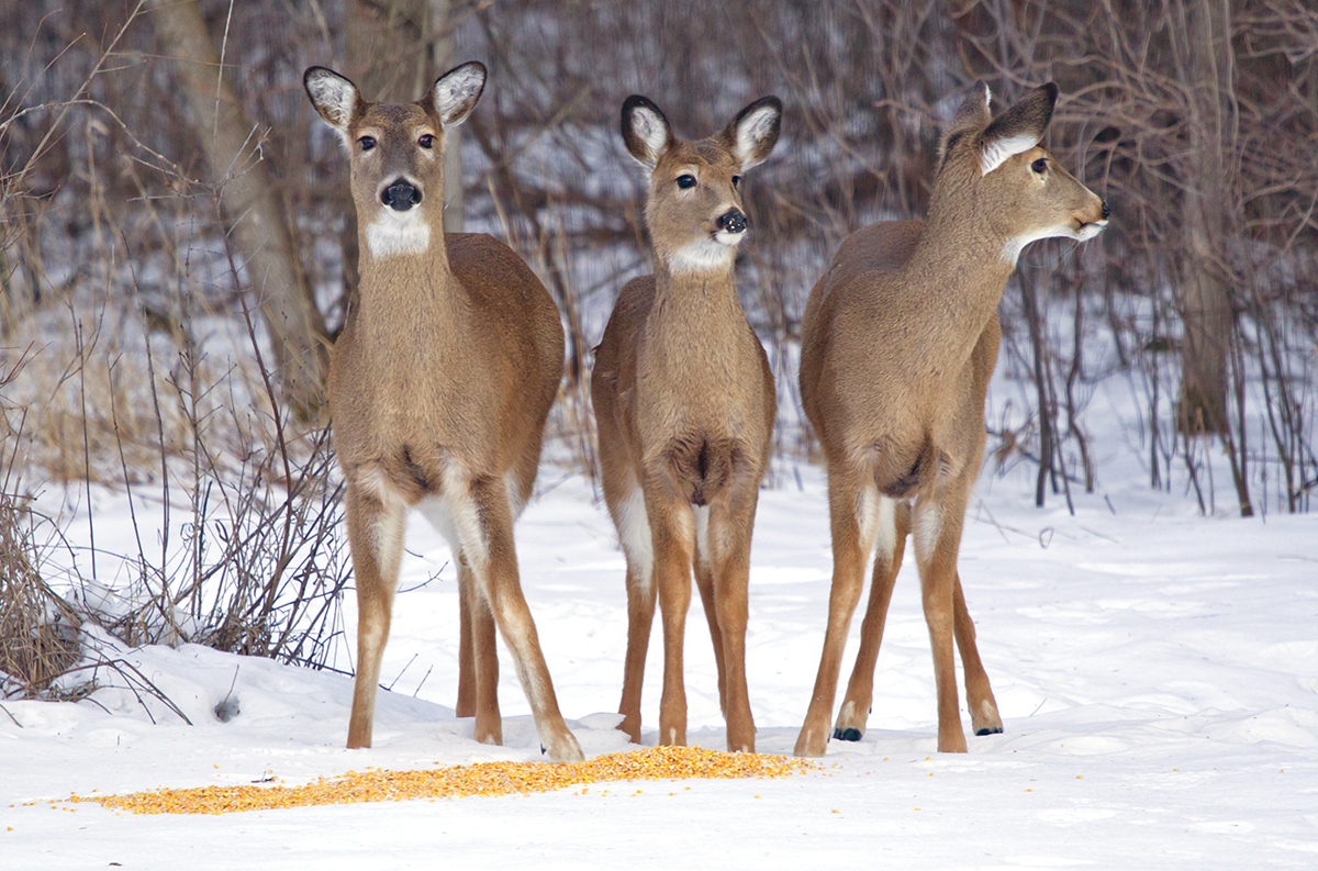the forcing it deer hunting mentality realtree