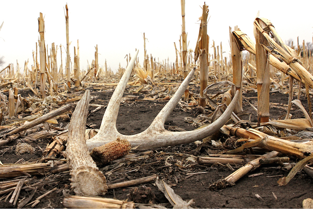 Shed Hunting How To Find Shed Antlers Deer Hunting