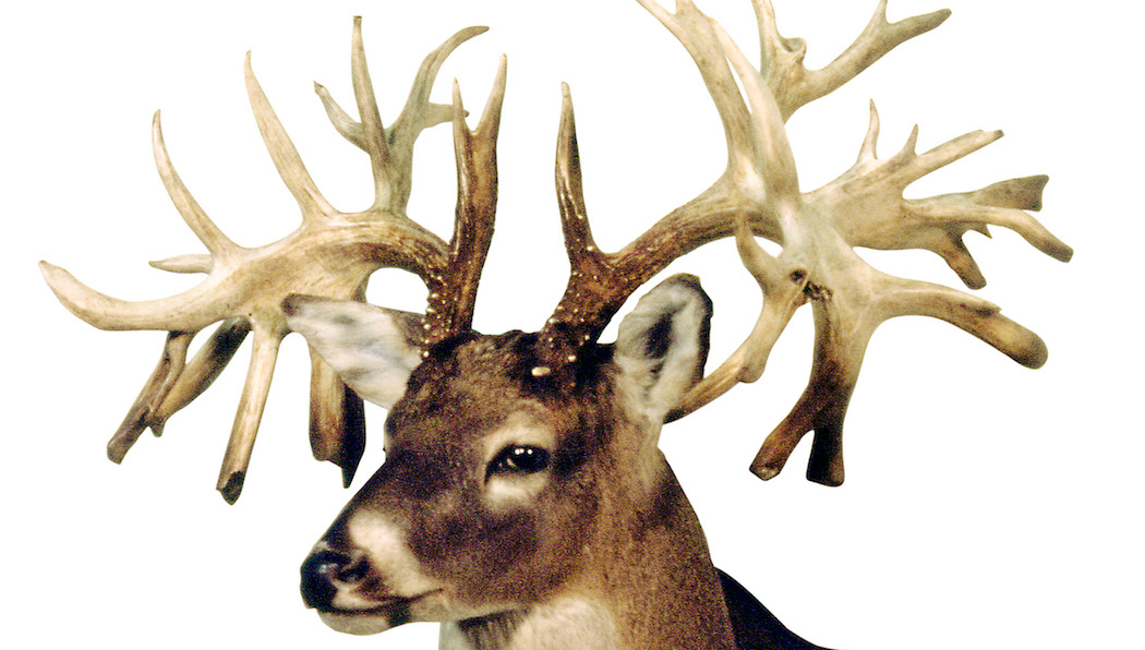 7 Biggest Non-Typical White-Tailed Bucks of All Time