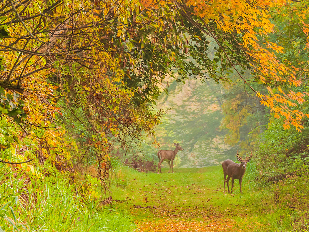 How To Scout For Deer In The Northeast Deer Hunting