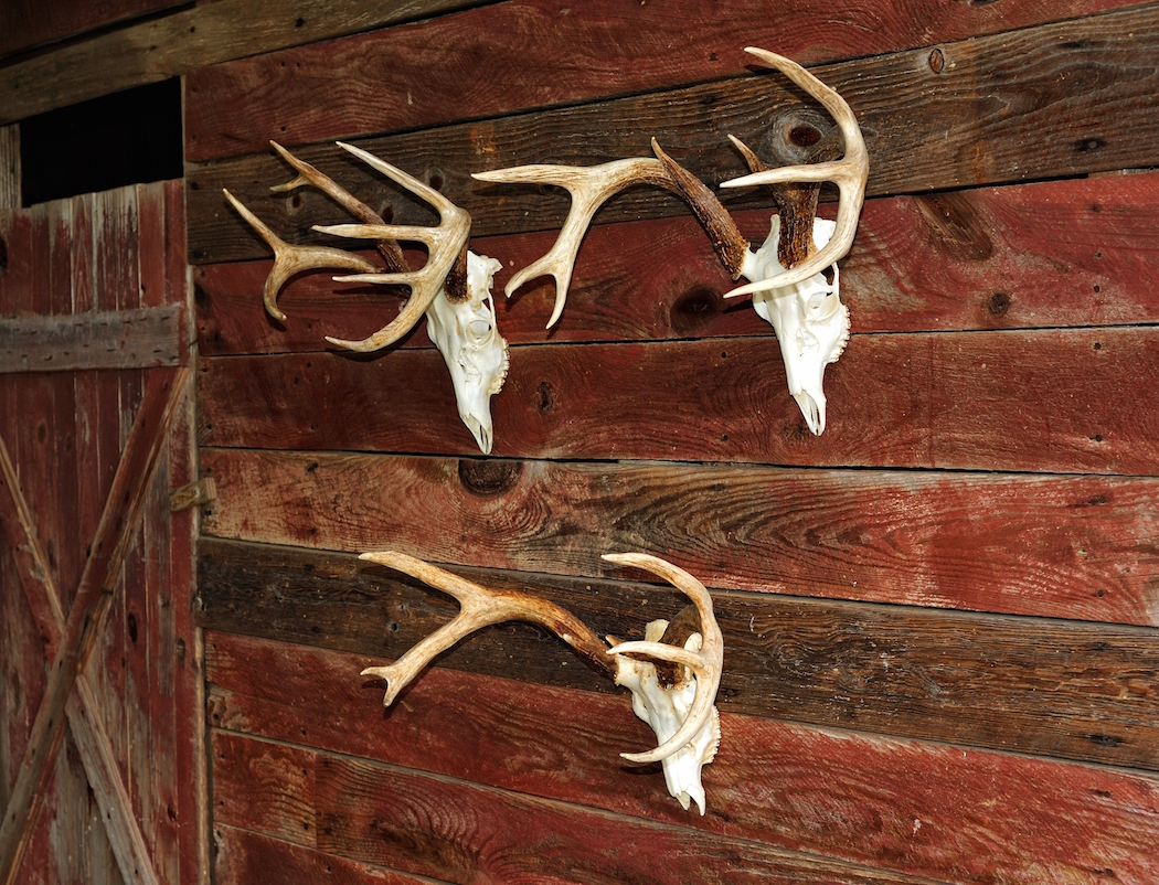 How To Do Your Own European Mount Deer Hunting Realtree Camo