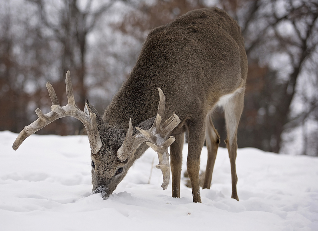 New york deer hunting realtree for Nys fishing license prices