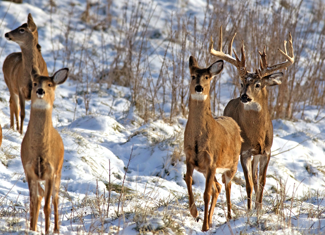 5 Conservation Organizations That Help Deer Hunting