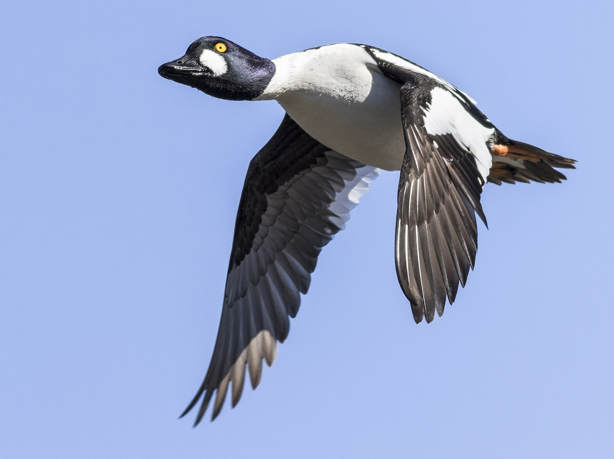 Duck hunting in rhode island for How much is a non resident fishing license in florida