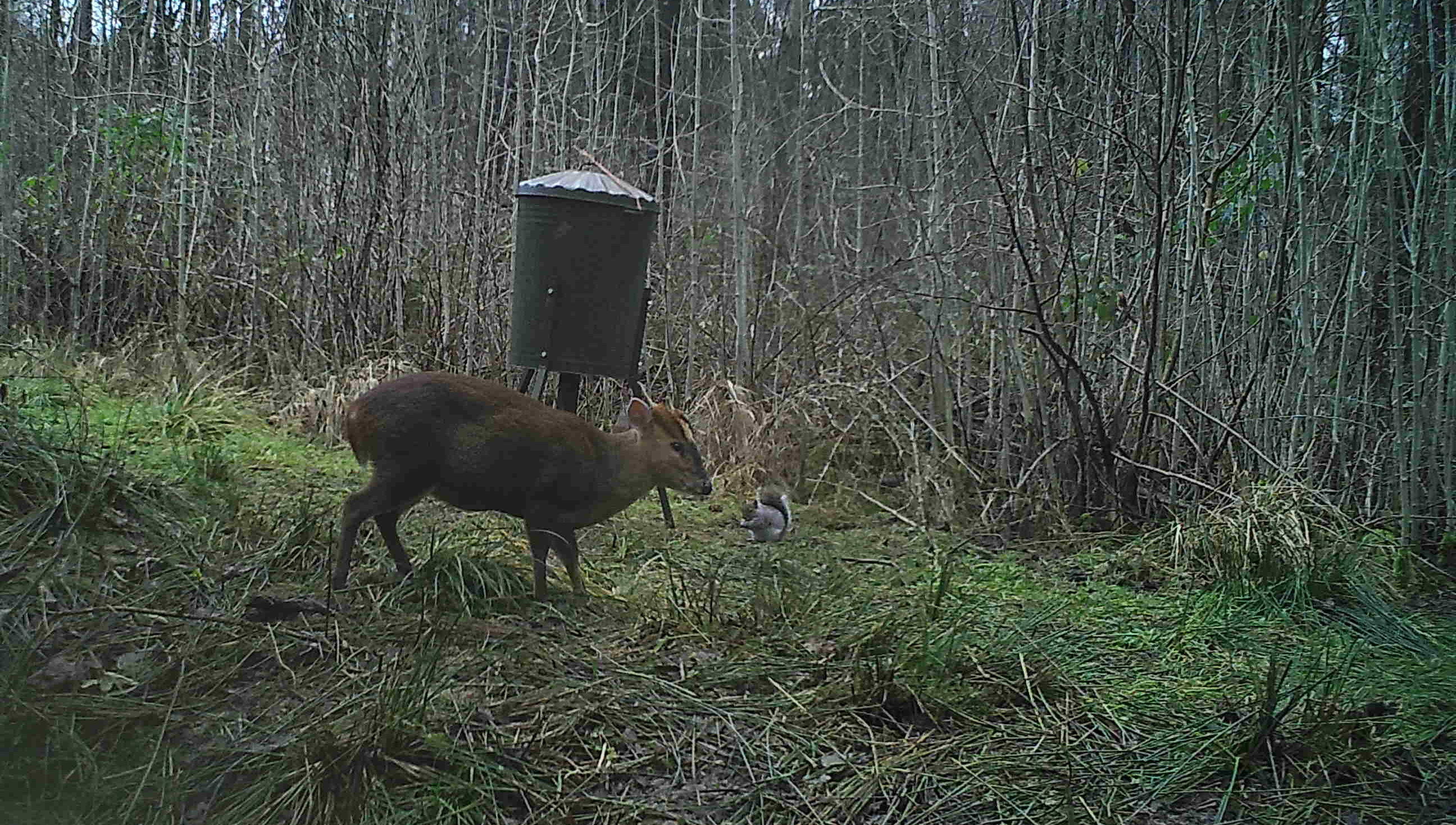 Deer Image From Trail Cam.