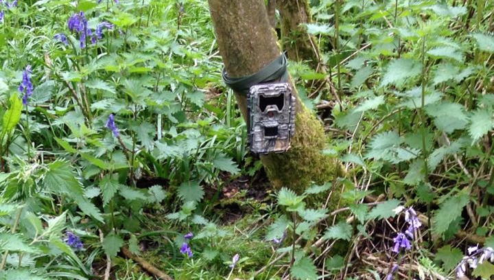 Trail Cam In Position.