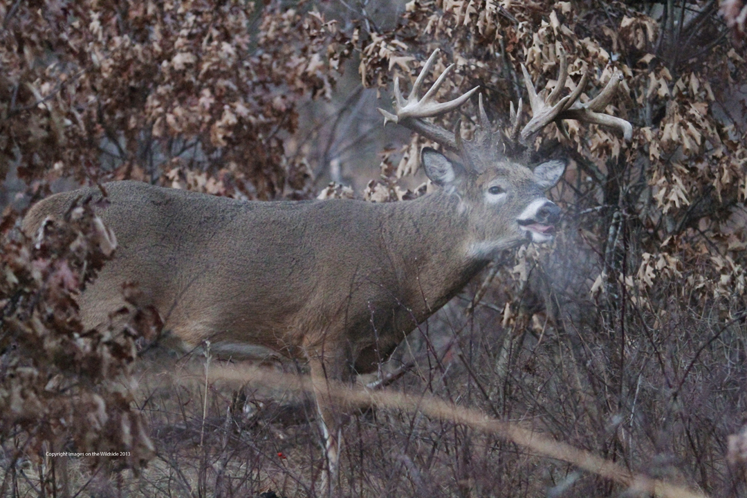 Busted: 5 Things You Don't Know About Deer Senses | Deer