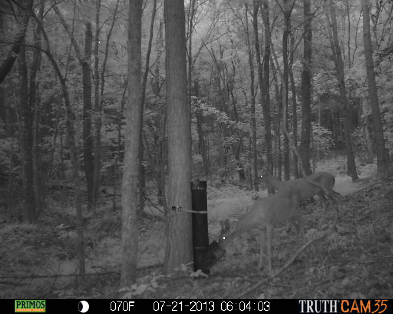 deer boss protein who best pellets questions report habitat for those feed feeder this gravity wildlife image buck