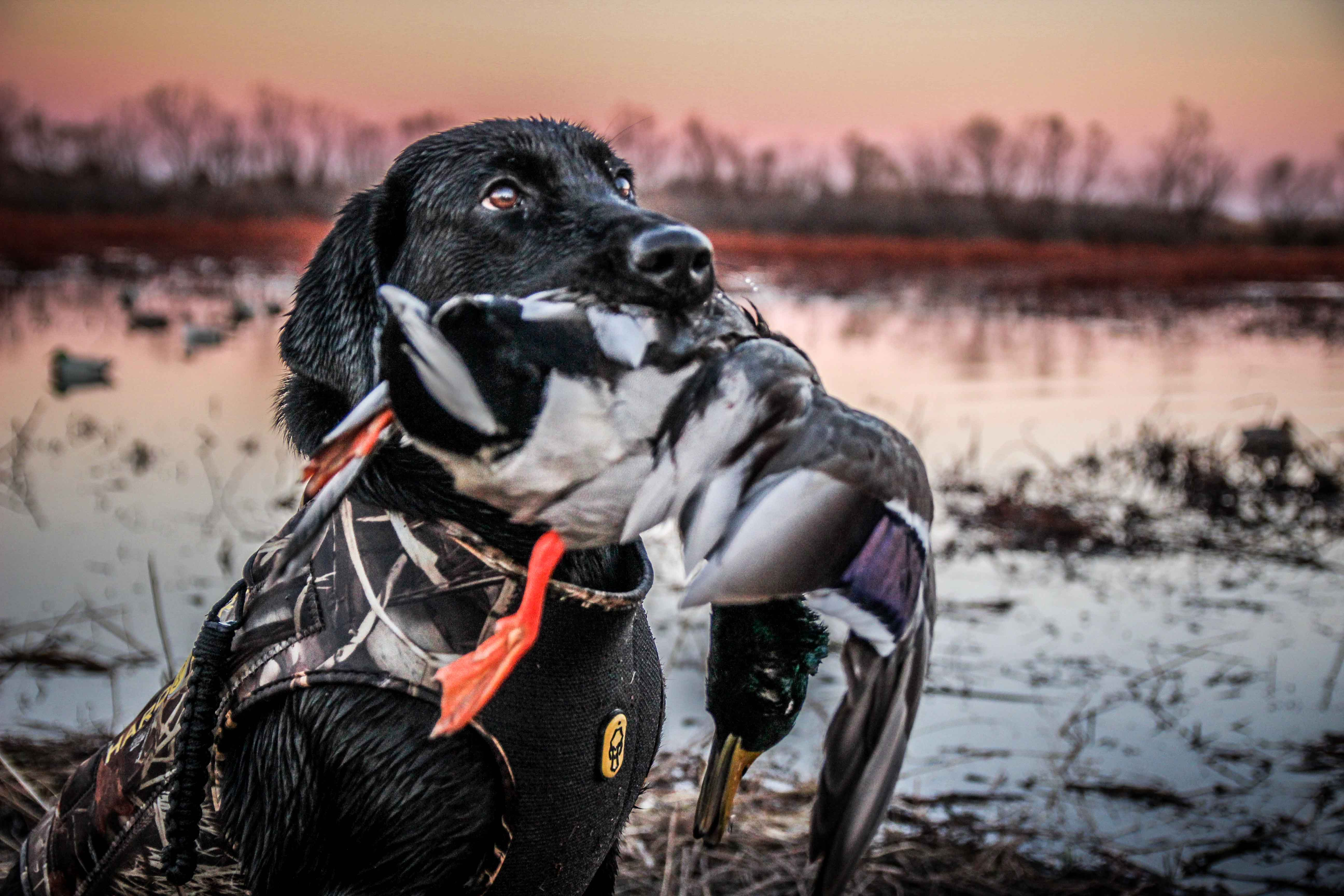 the x public land duck hunting in kansas waterfowl