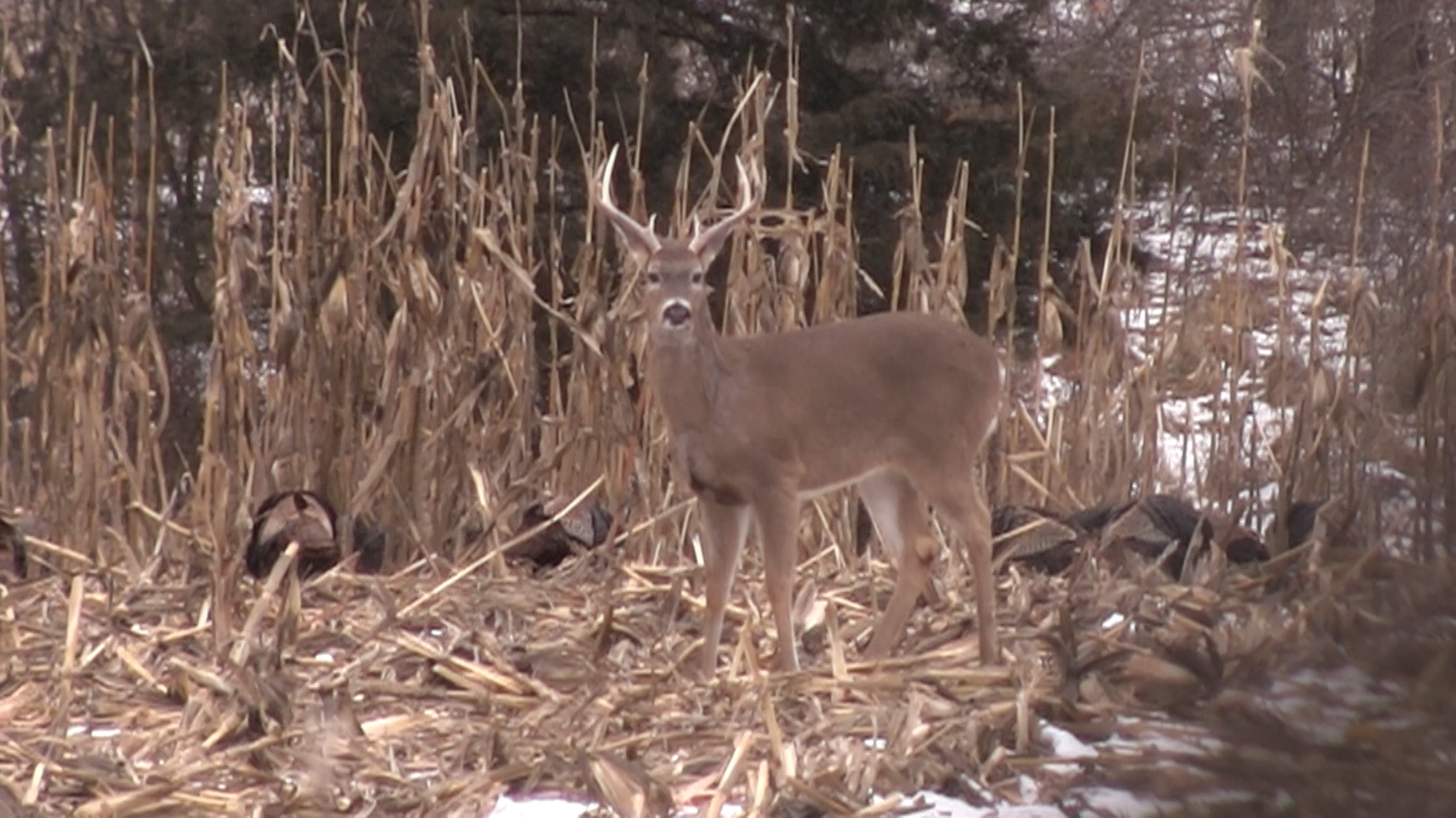 Should hunters expect to see fewer deer in 2014 because of winter kill ...