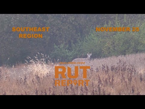 Southeast Rut Report: The Rut Is Heating Up in the Deep ...