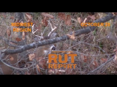 Midwest rut report older bucks are up on their feet for Realtree game and fish forecast