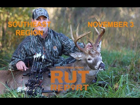 Southeast rut report some deep south deer are breeding for Realtree game and fish forecast