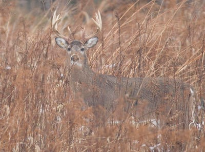 The state might be small, but it has some good deer. (John Hafner photo)