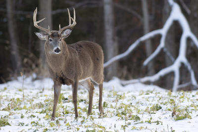 Rhode Island might be small, but it has some good deer hunting. (John Hafner photo)