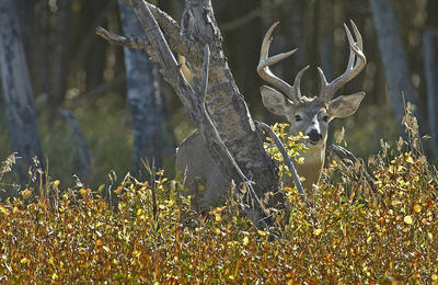 Washington isn't known for whitetails, but it has a few. (Tim Irwin photo)