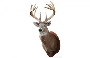 A Century-Long Story of a Lost Buck