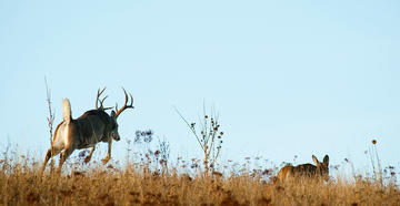 Best Times to Hunt the Whitetail Rut