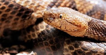 Woman bitten by copperhead while doing laundry