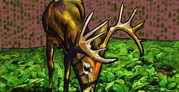 Best Food Plot Shapes for Bowhunting Whitetails