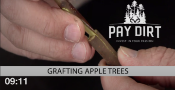 Pay Dirt: How to Graft Apple Trees