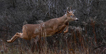 2019 Whitetail Report: The States Tagging the Youngest and Oldest Bucks