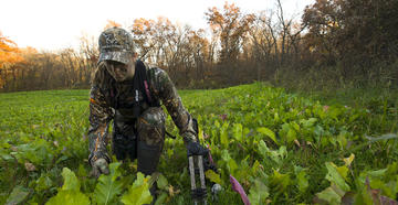 Whitetail Food Groups: Greens vs. Grains