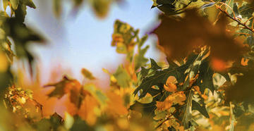 Oak Tree ID Guide: The Difference Between Acorn-Producing Tree Species