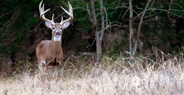 The ranch owners say they were told the land they were buying had an abundance of trophy whitetails, but it didn't. (Image © Russell Graves)