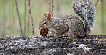 Squirrel Ransacks Home While Owners Away on Vacation -- image by Stephanie Mallory