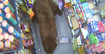 California Campers Shoot 'Safeway Bear' Known for Raiding Stores