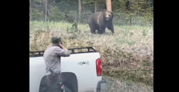 Watch: Yellowstone Grizzly Charges Park Ranger