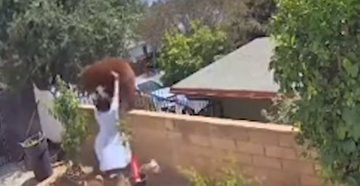 Watch: Woman Pushes Bear Off Wall to Save Dogs