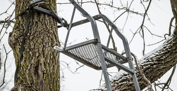 Is It Safe to Leave Treestands Out All Year?