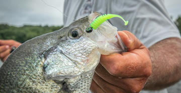 Best Lures for Crappie Fishing: Jigs vs. Minnows