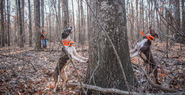 Chasing squirrels with a dog may be the best way to introduce anyone, young or old, to hunting. (© Larry Case photo)
