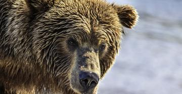Firearms and ammo tips for bear country. (© Karen Geswein Photography-Shutterstock)