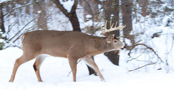 Places to Find Giant Late-Season Bucks