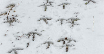Don't let the weather report keep you from hunting (© Bill Konway photo)