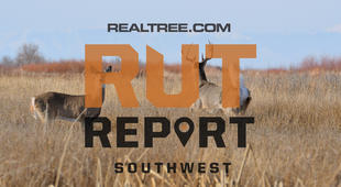 Southwest Rut Report: Rut Activity Is Still Going Strong in Texas