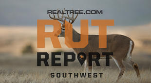 Southwest Rut Report: The Rut Is Primed in the Far Southwest