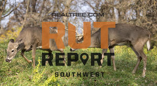 Southwest Rut Report: The Rut Is Heating Up in the Southern Half of the Region