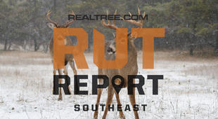 Southeast Rut Report: The Rut Is Building in Alabama, Mississippi and Louisiana